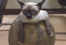 zdepasta mačka