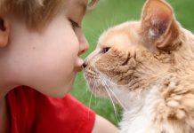 Mačka i zdravlje