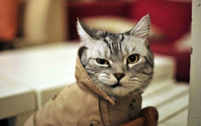 mačak lopov