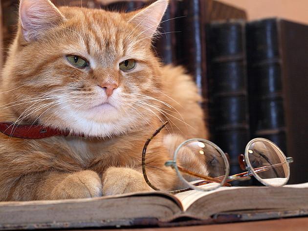 pametna mačka