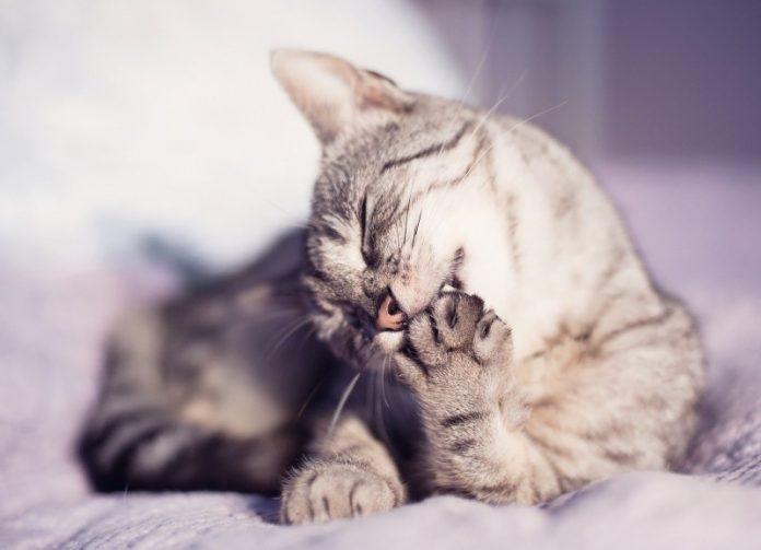 mačka grize kandži