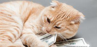 mačka i novac