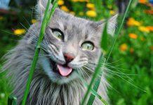 ponašanje mačke