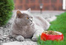 mačka ne želi hranu