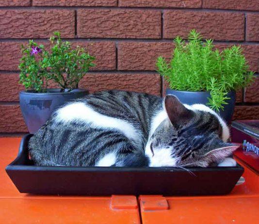 Mačka spava