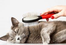 četkanje mačke
