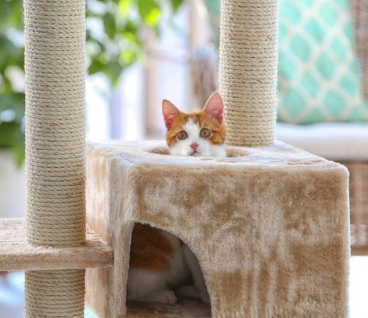 penjalica za mačke
