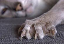 Kanže mačke