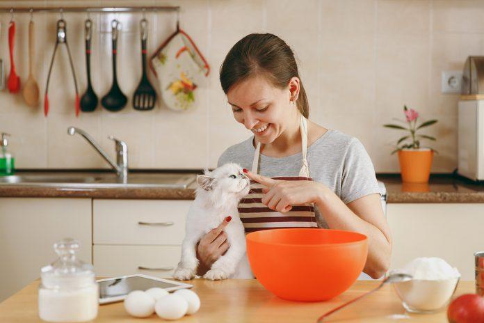 hrana za mačku