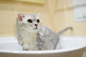 kupanje ma%C4%8Dke