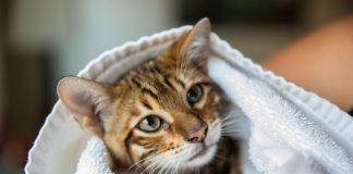 kupanje mačke