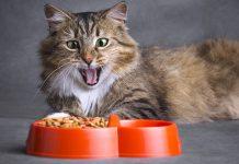 suva hrana za mačke