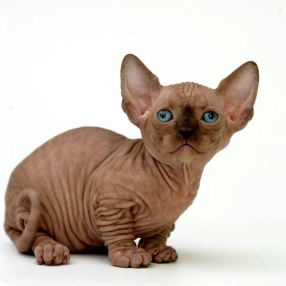 Bambino mačka