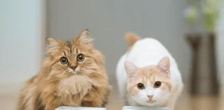Prehrana za sterilizirane mačke