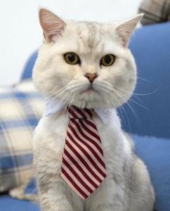 Mačak doma