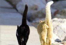 mačak i mačka
