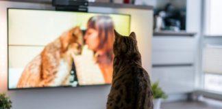 Zašto mačka gleda TV