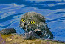 Zašto se mačke boje vode