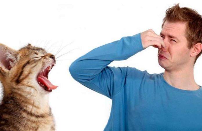 loš zarah kod mačke