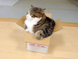 macka i kutija