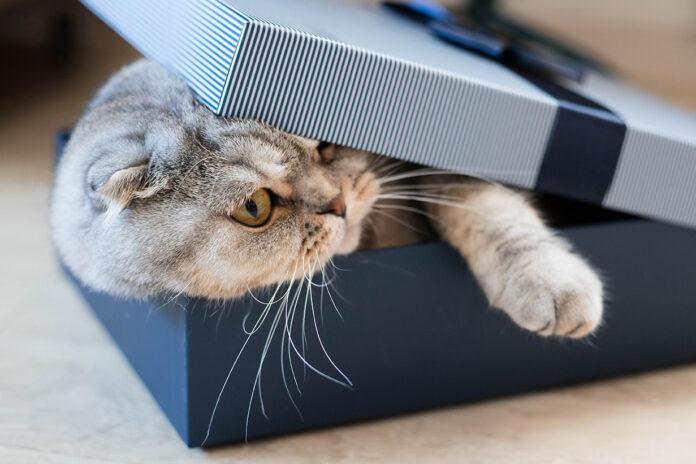mačke vole kutije