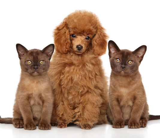 burmese cats and dog